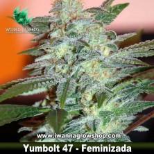 Yumbolt 47 – Feminizada