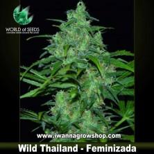 Wild Thailand – Feminizada