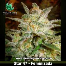 Star 47 – Feminizada