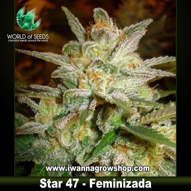 Star 47