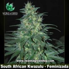 South African Kwazulu – Feminizada