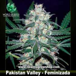 Pakistan Valley – Feminizada