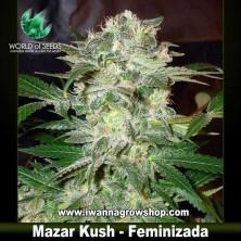 Mazar Kush – Feminizada
