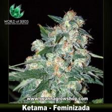 Ketama – Feminizada