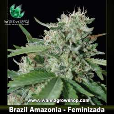 Brazil Amazonia – Feminizada