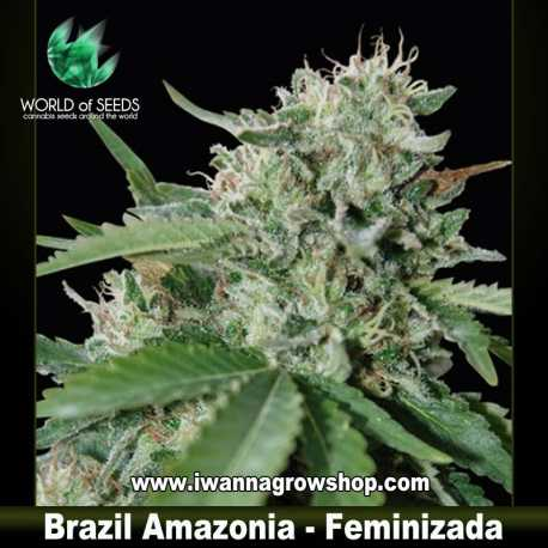 Brazil Amazonia