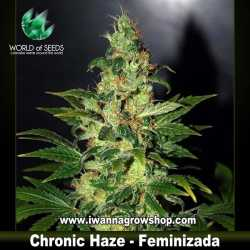 Chronic Haze – Feminizada