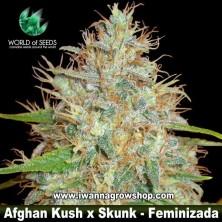 Afghan Kush x Skunk – Feminizada