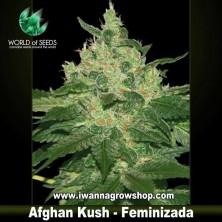 Afghan Kush – Feminizada