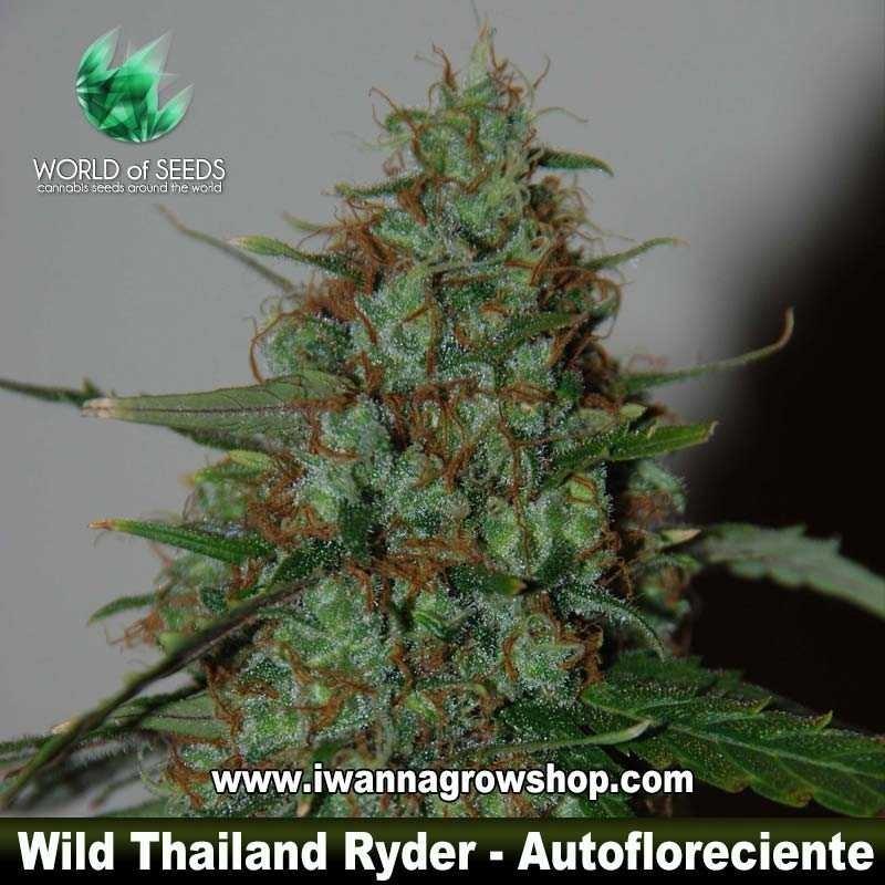 Wild Thailand Ryder