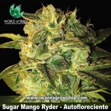 Sugar Mango Ryder