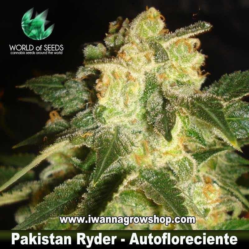 Pakistan Ryder
