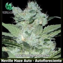 Neville Haze Ryder – Autofloreciente