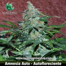 Amnesia Ryder – Autofloreciente