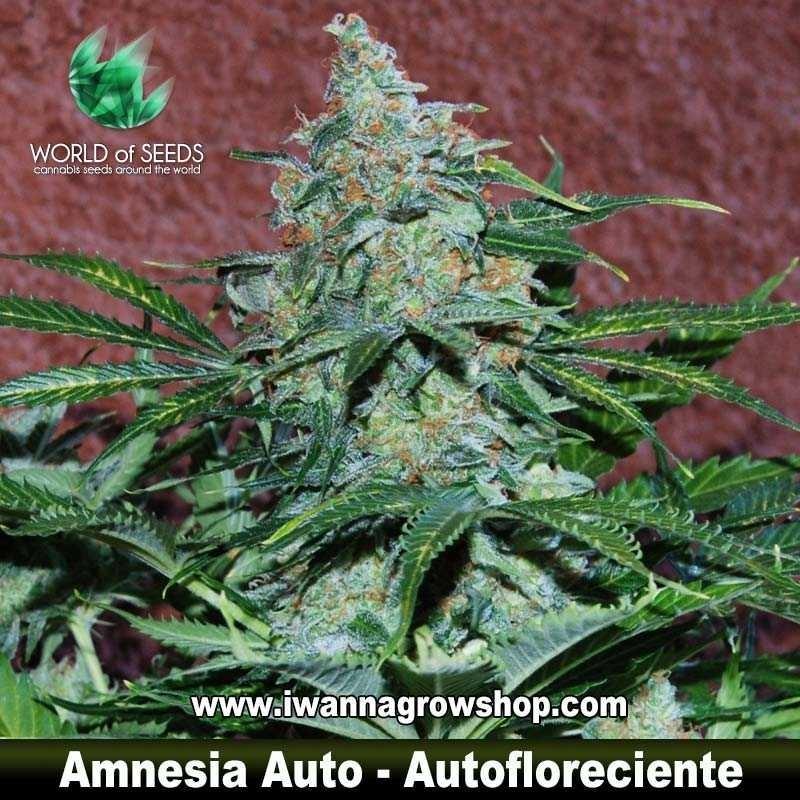 Amnesia Ryder
