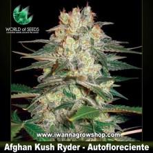 Afghan Kush Ryder – Autofloreciente
