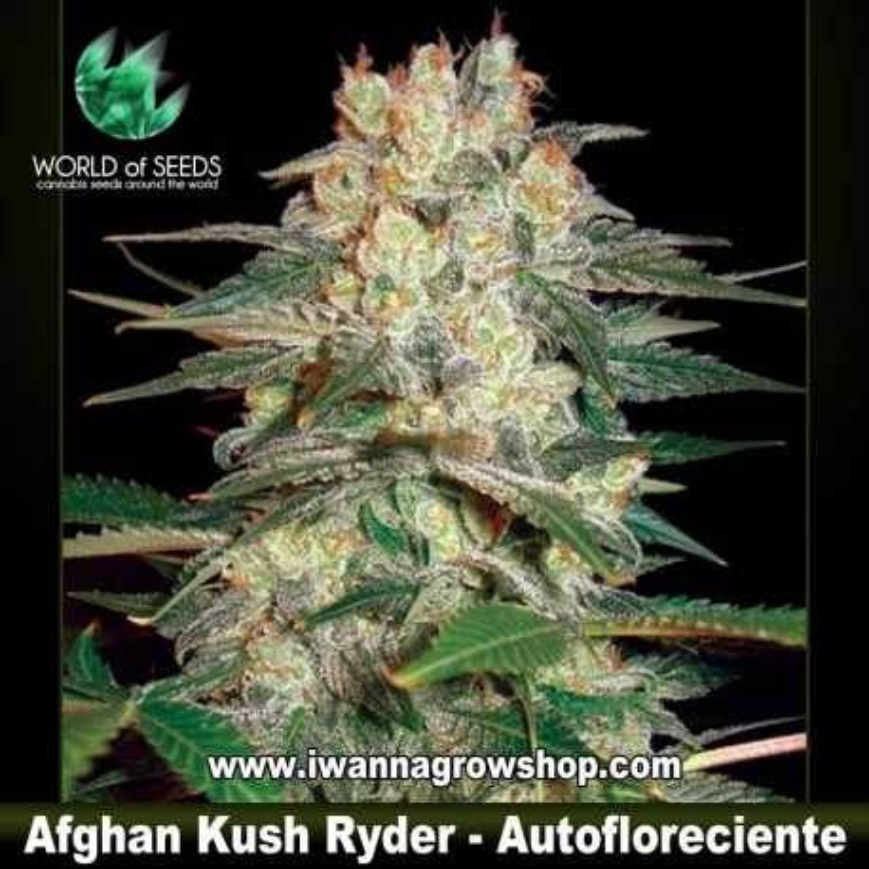 Afghan Kush Ryder