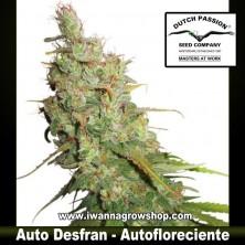 Auto Desfran – Autofloreciente