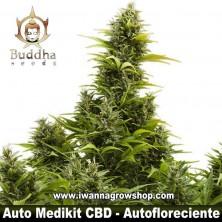 Auto Medikit CBD – Autofloreciente