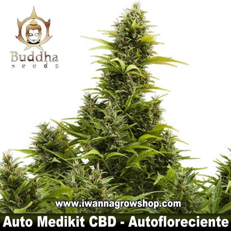 Auto Medikit CBD