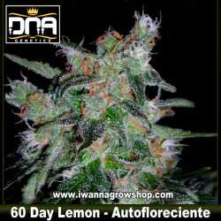 60 Day Lemon Auto – Autofloreciente