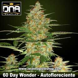 60 Day Wonder Auto – Autofloreciente