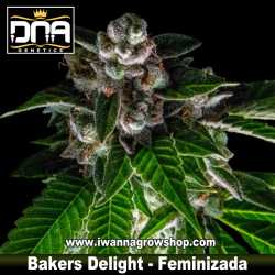 Bakers Delight – Feminizada