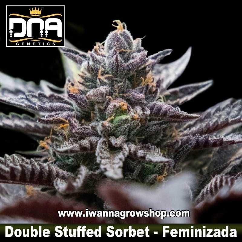 Double Stuffed Sorbet – Feminizada