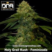 Holy Grail Kush – Feminizada