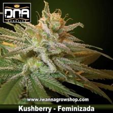 Kushberry – Feminizada