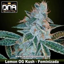 Lemon OG Kush – Feminizada