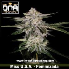 Miss Usa – Feminizada