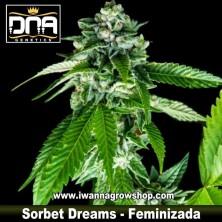 Sorbet Dreams – Feminizada