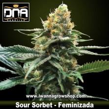 Sour Sorbet – Feminizada