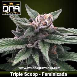 Triple Scoop – Feminizada