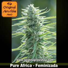 Pure Africa – Feminizada – Original Sensible