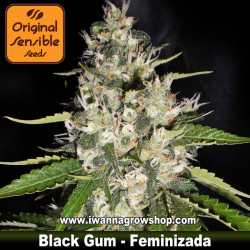 Black Gum – Feminizada – Original Sensible