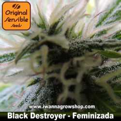 Black Destroyer – Feminizada – Original Sensible