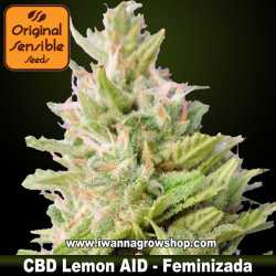 CBD Lemon AID – Feminizada – Original Sensible
