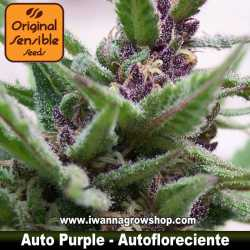 Auto Purple – Autofloreciente – Original Sensible