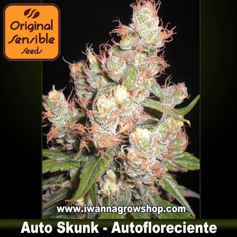 Auto Skunk – Autofloreciente – Original Sensible