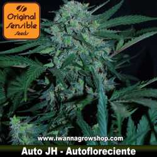 Auto JH – Autofloreciente – Original Sensible