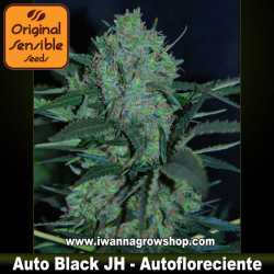 Auto Black JH – Autofloreciente – Original Sensible