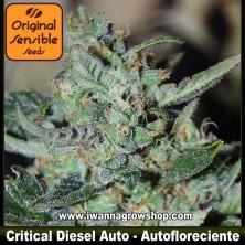 Critical Diesel Auto – Autofloreciente – Original Sensible