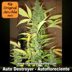 Auto Destroyer – Autofloreciente – Original Sensible