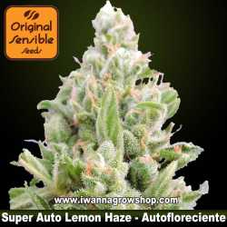 Super Auto Lemon Haze – Autofloreciente – Original Sensible