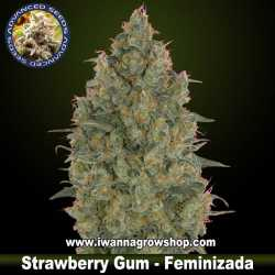 Strawberry Gum – Feminizada