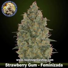 Strawberry Gum