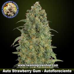 Auto Strawberry Gum – Autofloreciente