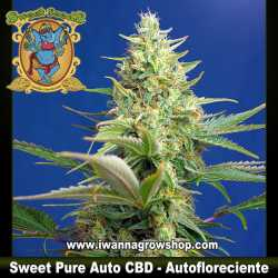 Sweet Pure Auto CBD